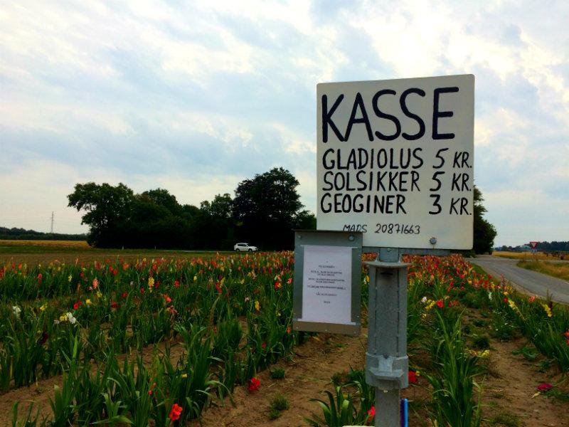Pluk selv blomster Sjælland
